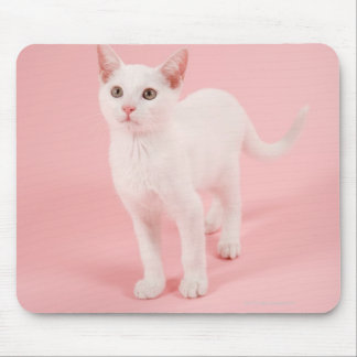 Young white cat 2 mouse pad