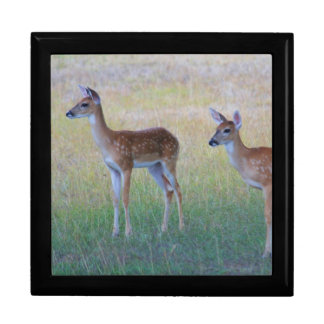 Young Whitetail Deer Large Square Gift Box