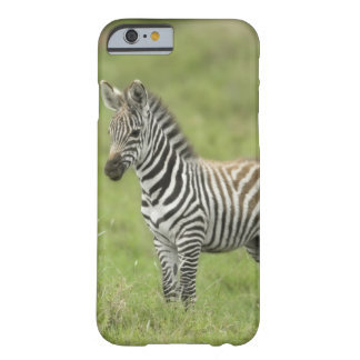Young Zebra In The Serengeti Plain Barely There iPhone 6 Case