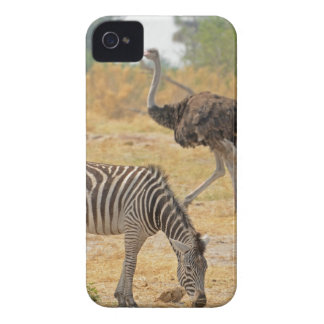 Zebra and Ostrich TomWurl.jpg iPhone 4 Covers