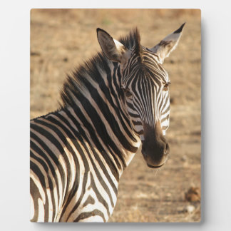 Zebra on the Savannah Plaque