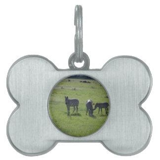 zebra pet ID tags