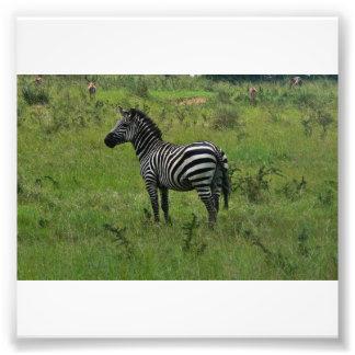 Zebra Print Photo