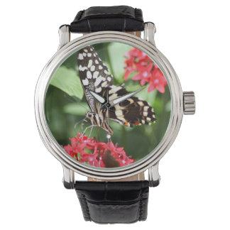 Zebra Striped Butterfly Watch