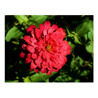 """""""zinnia"""" by Coressel Productions Postcard"""