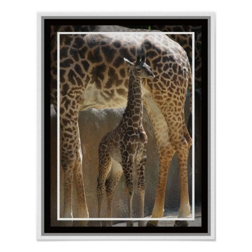 Zoo Baby 1 Print
