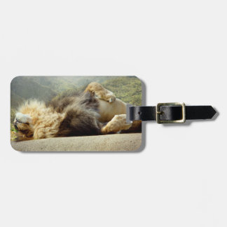 Zoo Lion Dreaming of a Jungle Luggage Tag