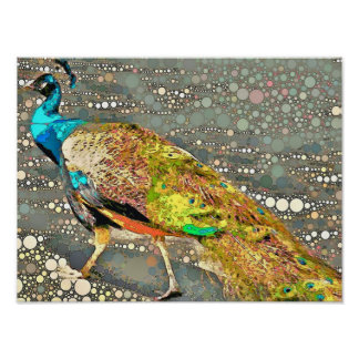 Zoo Peacock Poster